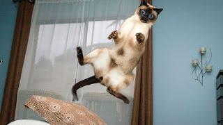[HILARIOUS!!] Cat Jump Fails