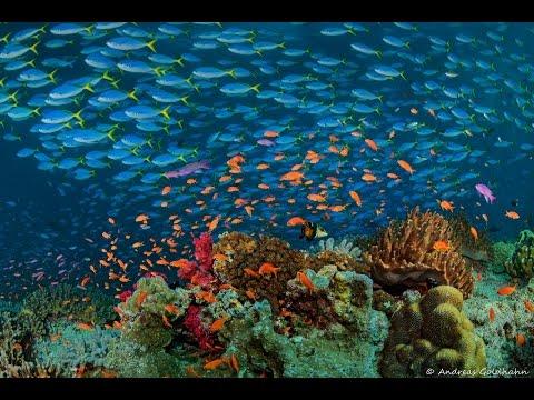 Tonga and Fiji Diving 2016
