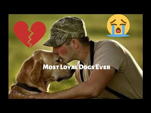 most-loyal-dogs-(grab-your-tissue)