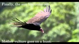 Book Trailer 2, Survival Secrets of Turkey Vultures