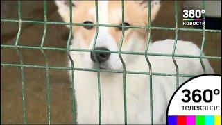 В Ногинске могут закрыть единственный приют для собак