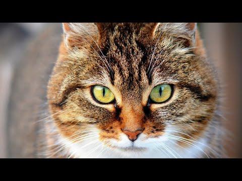 Почему люди любят кошек?