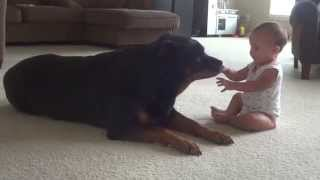 Rottweiler And Baby #2 Playing