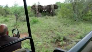 Elephant Encounter - Guiding through a tricky situation!