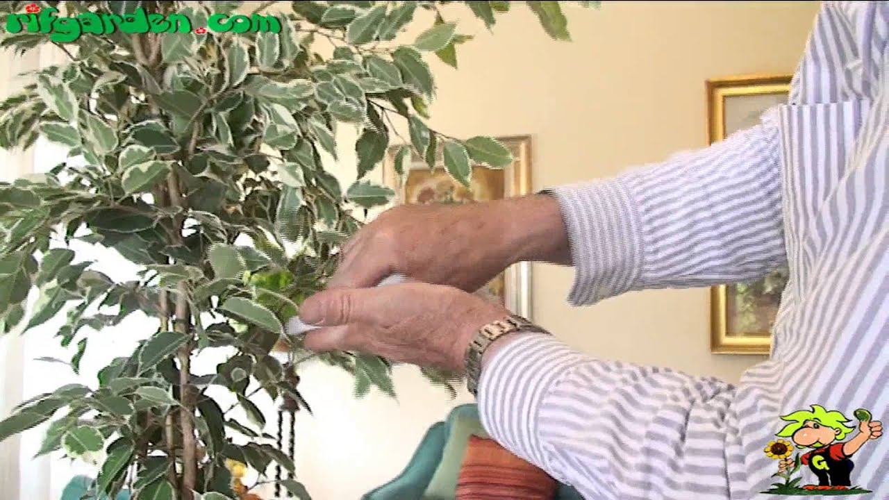 Communication on this topic: How to Dust Houseplants, how-to-dust-houseplants/