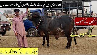 Qurbani Latest Update Cow Mandi 2021 Lahore | Bakra Mandi Pakistan 2021| Cattle Of Pakistan 2021