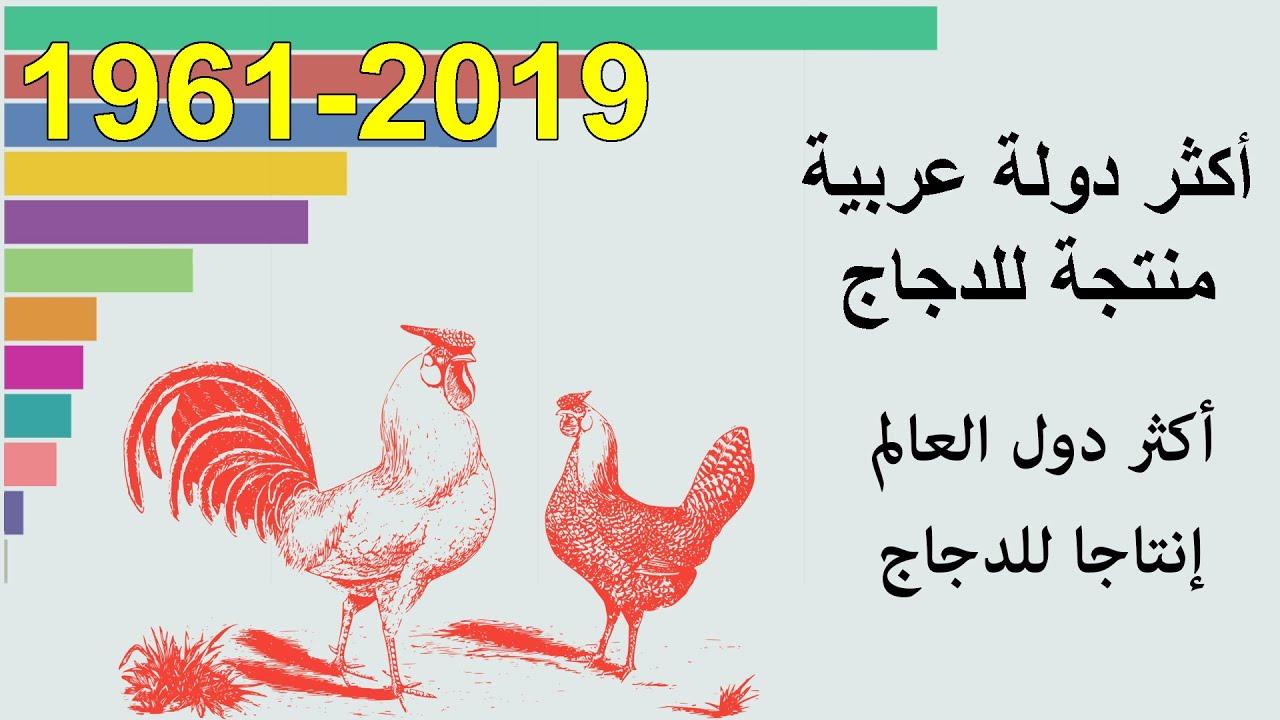 أكثر الدول العربية إنتاجا للدجاج بين 1961 و 2019