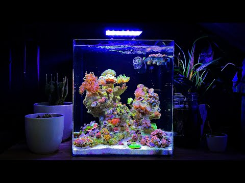 Mixed Coral Reef Tank Update Month Six - Nano Reef Tank No Skimmer