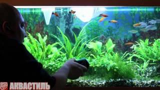 Уход за аквариумом. Как чистить стекла аквариума магнитом? Аквариумистика.(Как почистить стекла аквариума от наросшей грязи и водорослей? Смотрите подробнее: http://www.akvastil.com/blog/videoblog-3/pos..., 2013-06-12T12:29:48.000Z)