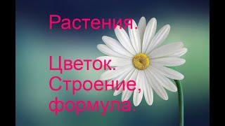 Строение цветка. Формула цветка.