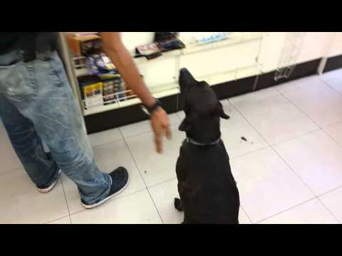 Cute dog at 7-11 May 2015
