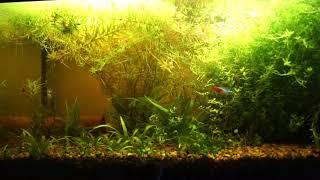 аквариум на грунте для кактусов спустя пол года