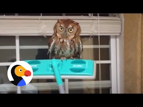 Guy Frees Owl From Kitchen Using A Swiffer | The Dodo