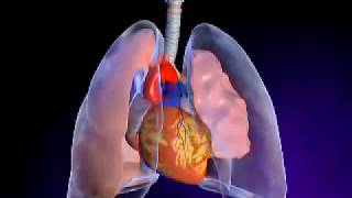 Pneumothorax  or Collapsed Lung ▐ الاسترواح الصدري,انكماش الرئتين أو الصدر المثقوب