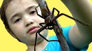Big Spider - Amazing Spider Girl Saves Daddy