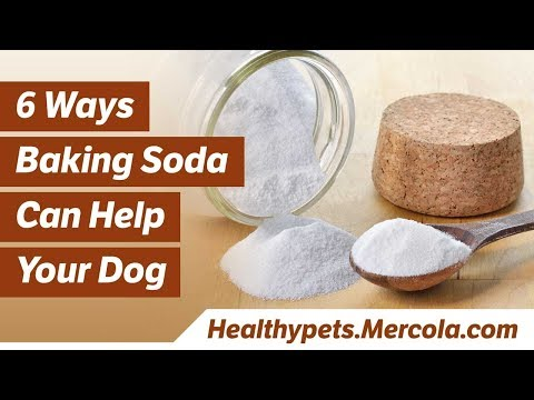 How to Use Baking Soda for Your Dog