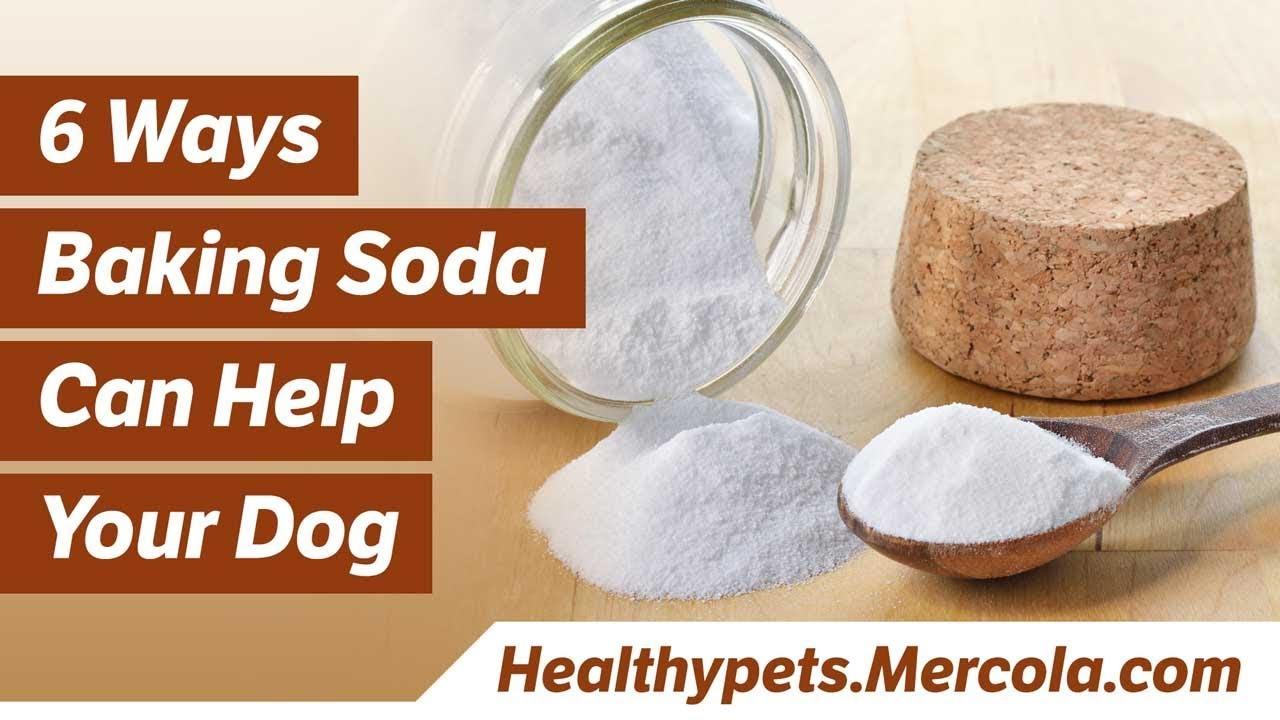 6 Ways Baking Soda Can Help Your Dog