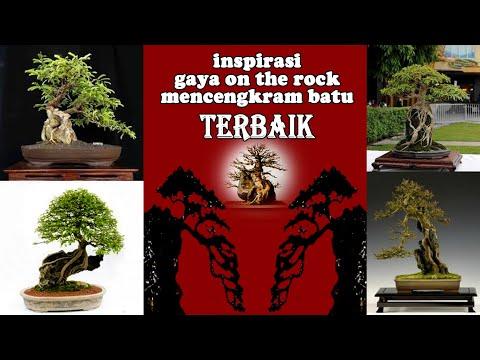 50-contoh-bonsai-on-the-rock-/-mencengkram-batu-paling-inspiratif