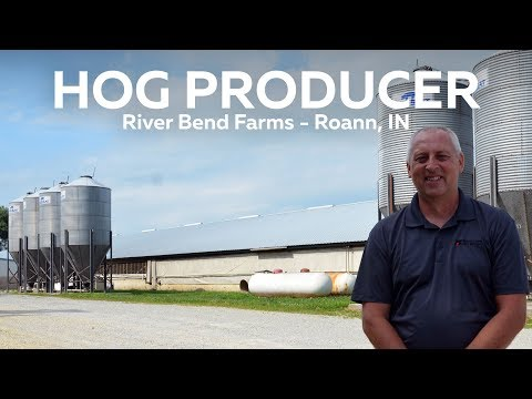 Indiana Hog Producer - River Bend Farms, Roann, IN