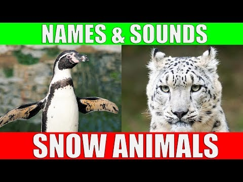 SNOW ANIMALS Names And Sounds For Kids To Learn | Learning Arctic Animals For Children