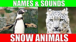 SNOW ANIMALS Names and Sounds for Kids to Learn   Learning Arctic Animals for Children