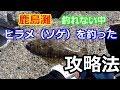 【茨城海釣り】鹿島灘ヘッドランドヒラメ(ソゲ)【攻略解説有】