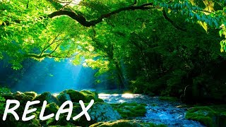 Soothing Music to Positive Feelings - Beauty Nature