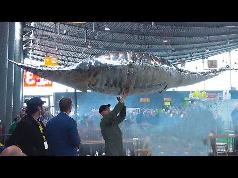 FLYING DEVIL FISH MANTA RAY AND FLYING DOLPHINS / Modell Süd Stuttgart 2016
