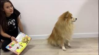 Найки пушистые штаны - алфавит для собаки | Говорящий шпиц
