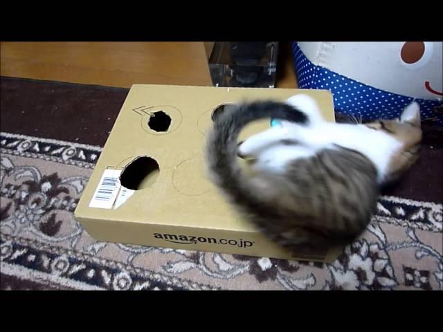 【猫】段ボールで、手作りおもちゃ