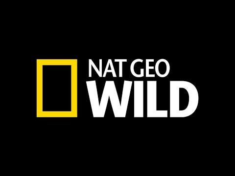 NAT GEO WILD - America's Underwater Treasures Sub Indonesia Part 01