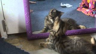 A cat and a mirror funny!