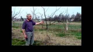 Repeat youtube video Orezivanje voća, stare sorte jabuka, stare sorte voća,Mirko Veić