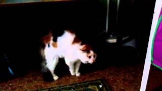 самое смешное видео 2014. Кошка от испуга заговорила!!! (ОООО НЕТ, НЕТ...)(Кошка от испуга заговорила человеческим голосом! ООО..НЕт, нет, нет..., 2014-12-12T03:37:27.000Z)