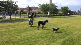 South Florida K-9 Specialist  Obedience Doral Dog Park.