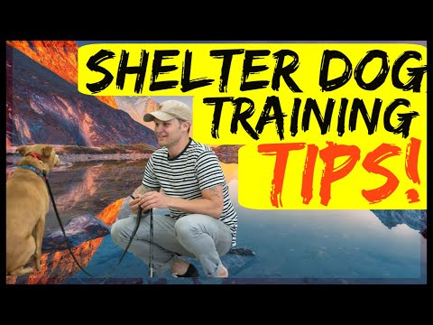 Shelter dog training tips| Tips to training my rescue dog