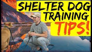 Shelter dog training tips  Tips to training my rescue dog