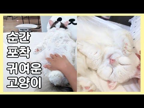 엉뚱해서 귀여운 고양이 - 짧은 영상 모음
