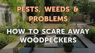 How to Scare Away Woodpeckers