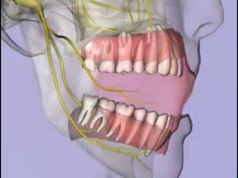 Nerve Supply Of Teeth Youtube