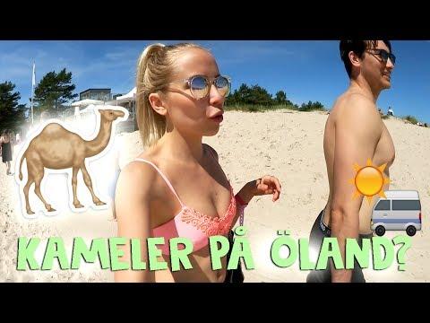 Kameler på Öland? | HUSBILSTURNÉN #6