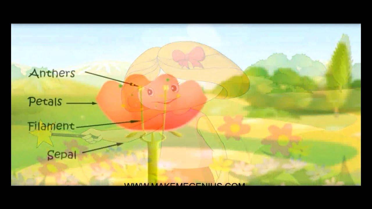 Parts of a Flower Urdu پھول کے مختلف حصوں CLASS 3 CLASS 4 GRADE 3 GRADE 4 G