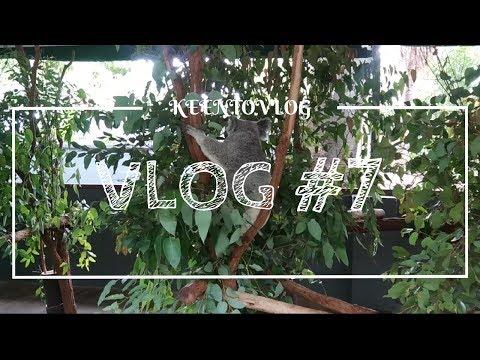 VLOG#7 LONE PINE KOALA SANCTUARY