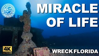 #Wreck Diving: Miracle of Life (aka Miss Luirdies) (Boca Raton, Florida)