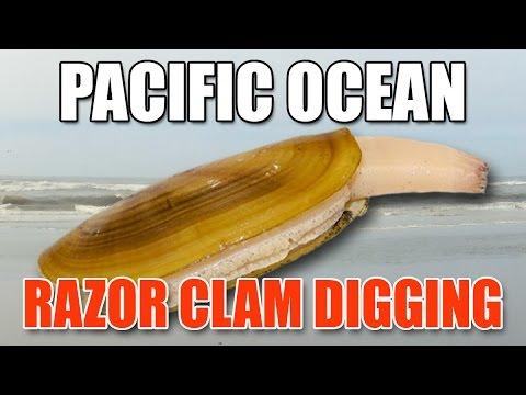 Pacific Ocean Razor Clam Digging