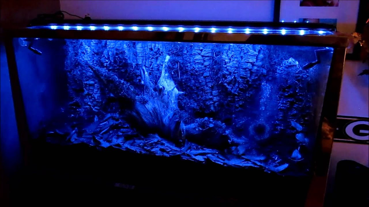 Vivarium Lighting Demo - YouTube