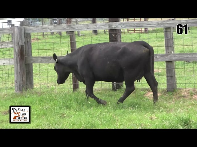 McCall Land and Cattle Lot 61