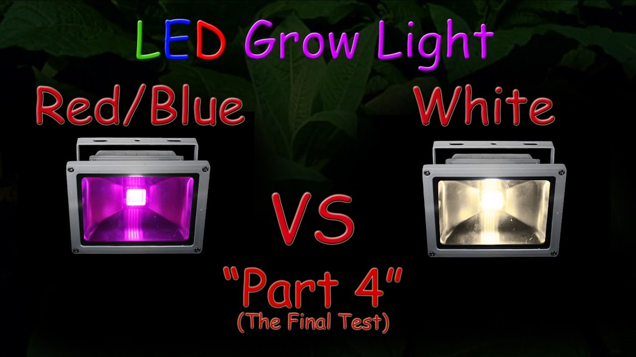 White Led Vs Red Blue Led Grow Test Part 4 The Final Results Hydroponic Tomatoes 2016