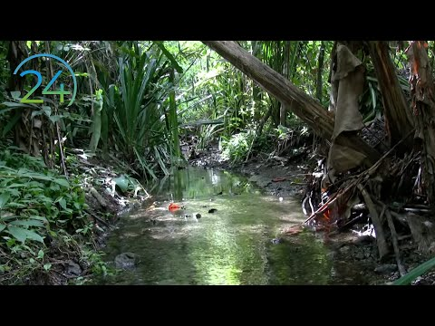 Costa Rica Rainforest Relaxation ~ 1 Hour Video - Perfectly Not Perfect! Relajación