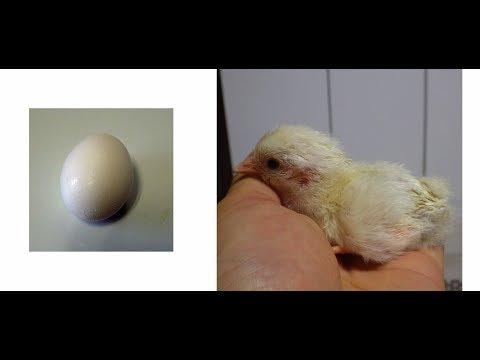 卵の成長を観察しよう